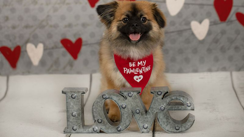 Support shelter pets this Valentine's Day