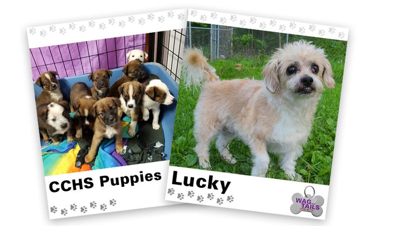 WAGNER TAILS: Puppies and Lucky