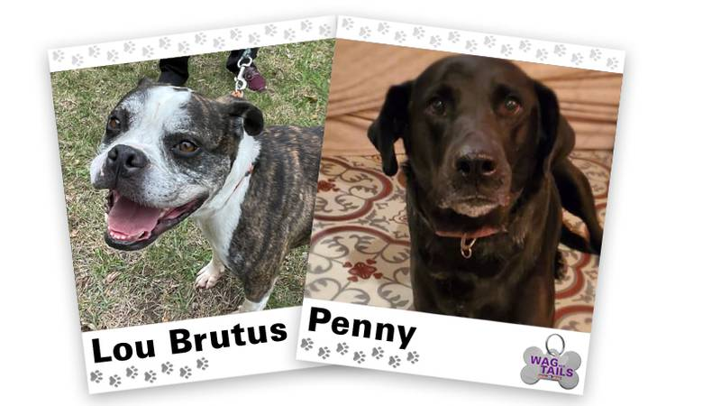 WAGNER TAILS: Lou Brutus and Penny