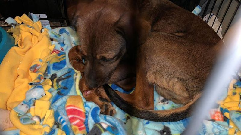 Clark County dog found with legs tied