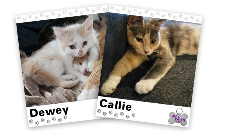 WAGNER TAILS: Dewey and Callie