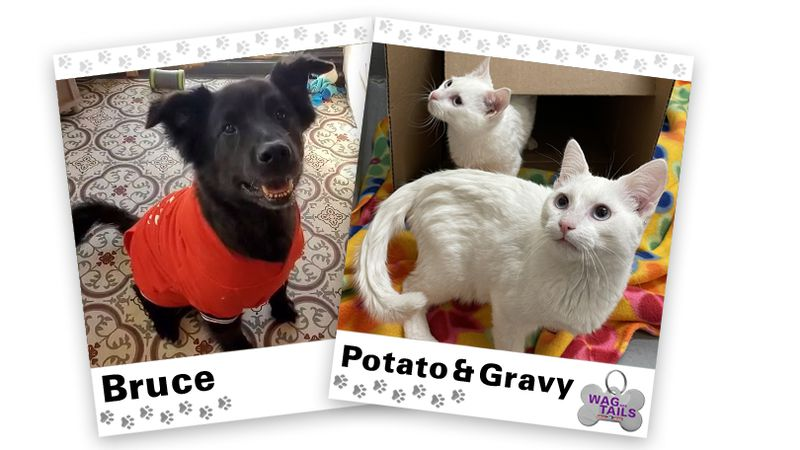 WAGNER TAILS: Bruce and Potato & Gravy