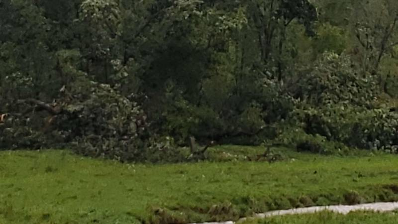 Tree damage from one of two EF1 tornadoes confirmed in Monroe County on August 11, 2021.
