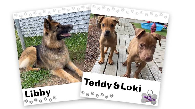WAGNER TAILS: Libby and Teddy & Loki