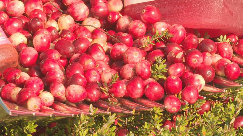 Wisconsin cranberry growers are ready for harvest.