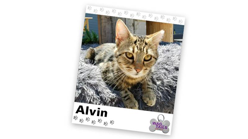 WAGNER TAILS: Alvin