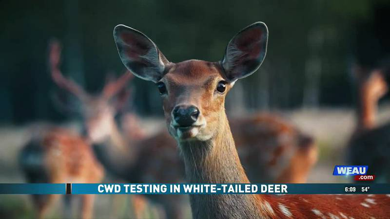 CWD Testing in White-Tailed Deer