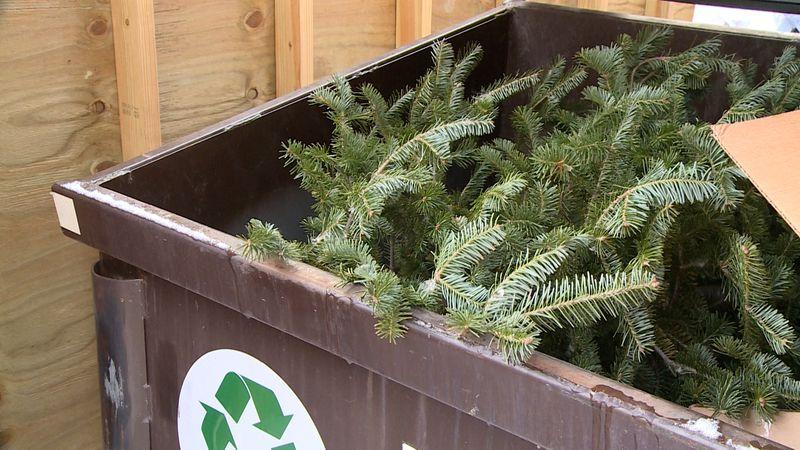 Christmas tree in trash