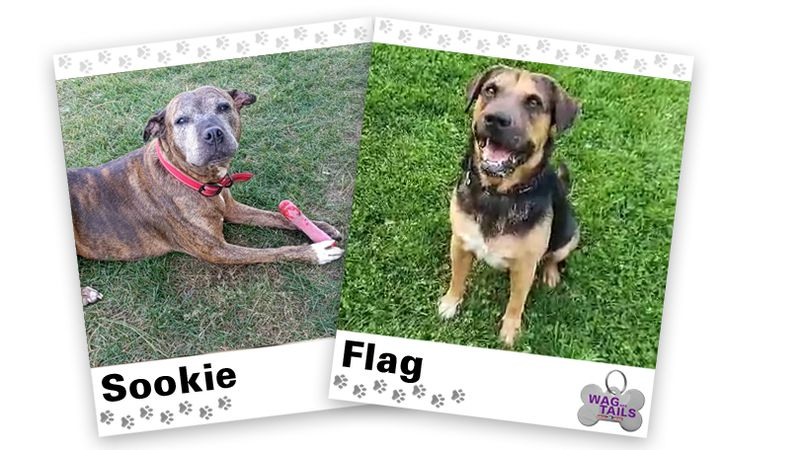 WAGNER TAILS: Sookie and Flag