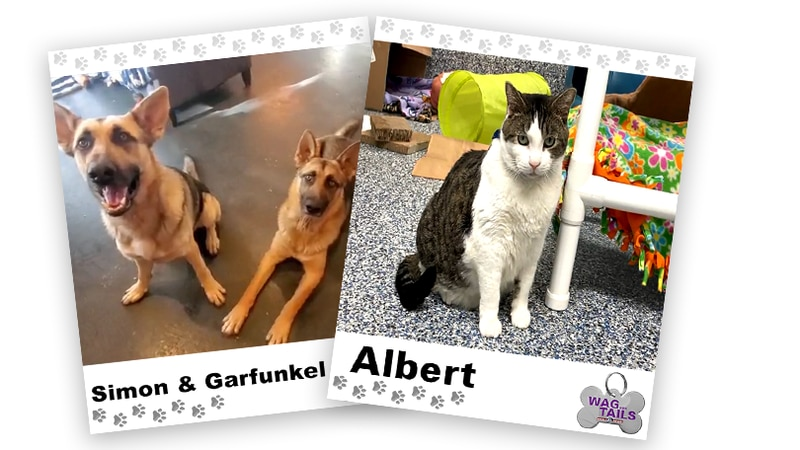 WAGNER TAILS: Simon & Garfunkel and Albert