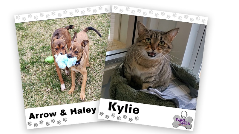 WAGNER TAILS: Arrow & Haley and Kylie