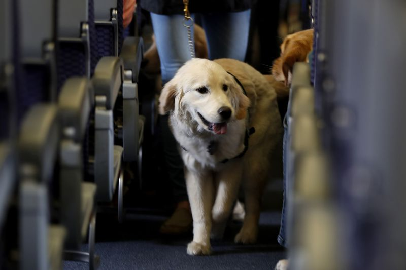 A service dog strolls through the aisle inside a United Airlines plane at Newark Liberty...