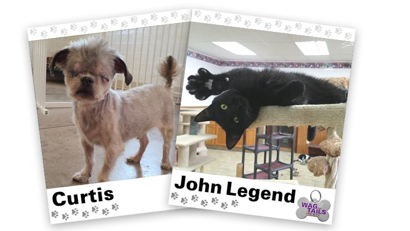 WAGNER TAILS: Curtis and John Legend