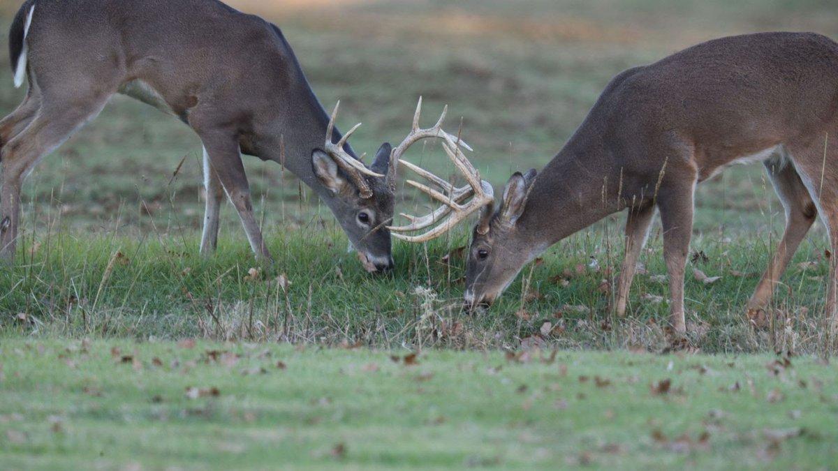 The nine-day gun hunting deer season begins Nov. 20.