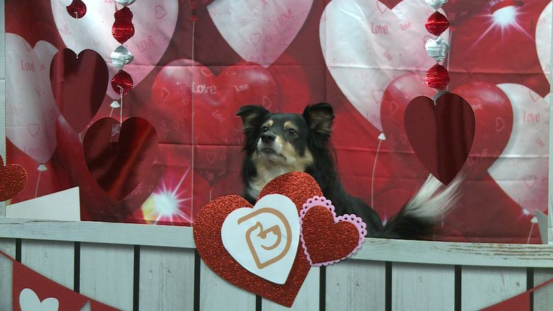 Puppy Kissing Booth at Dogtopia for Valentine's Day.
