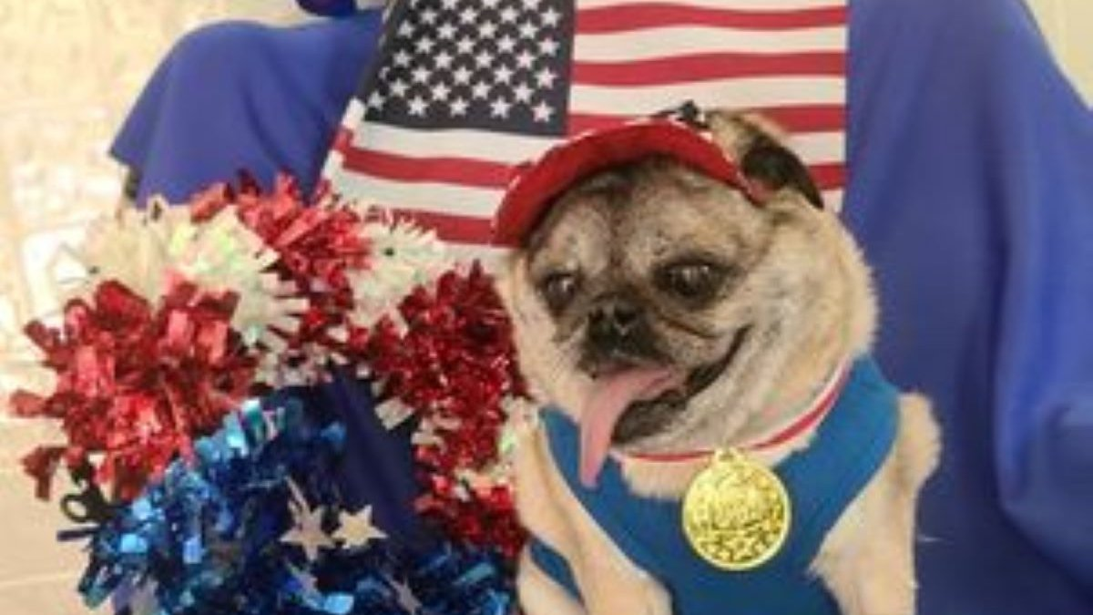 Four Chippewa Valley animal shelters host Olympic-Style event