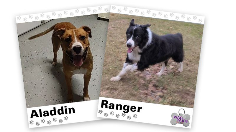 WAGNER TAILS: Aladdin and Ranger