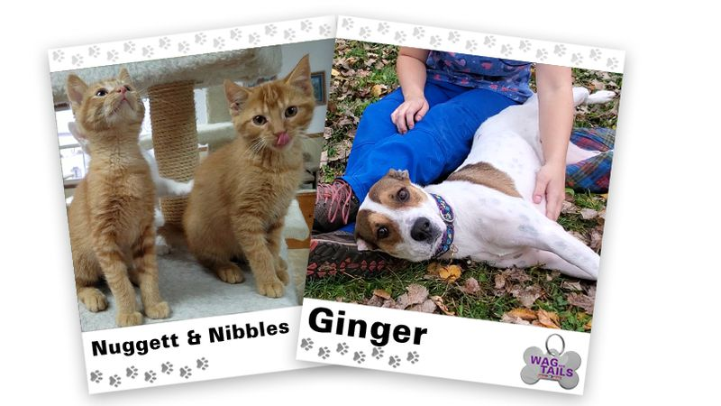WAGNER TAILS: Nuggett & Nibbles and Ginger