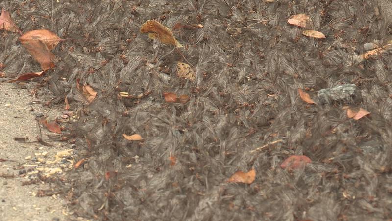 Millions of mayflies invade Nekoosa
