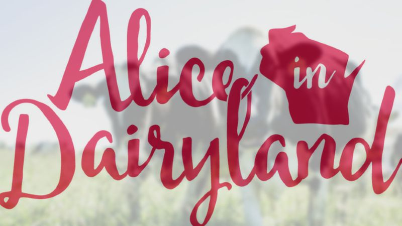 alice in dairyland