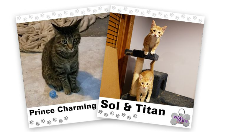 WAGNER TAILS: Prince Charming and Sol & Titan