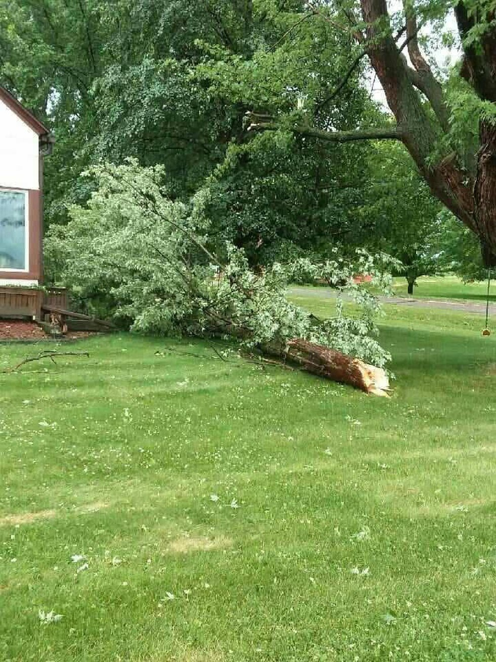 Large tree branch down