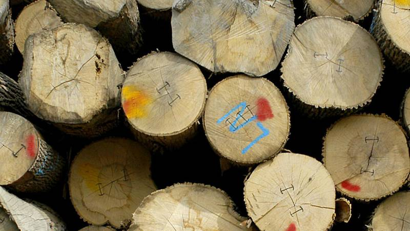 Stacked logs, photo (Associated Press)