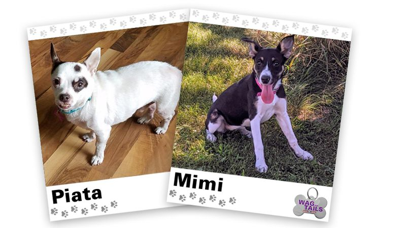 WAGNER TAILS: Piata and Mimi