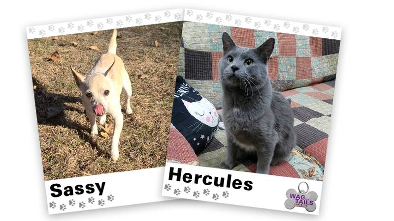 WAGNER TAILS: Sassy and Hercules