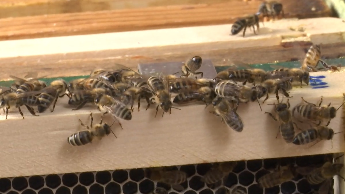 Overall the package looks to promote a healthy and robust pollinator population in Wisconsin.