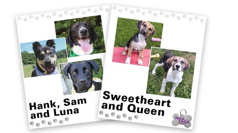WAGNER TAILS: Hank, Sam, & Luna and Sweetheart & Queen
