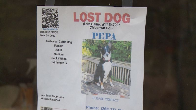Lost Dogs of Wisconsin