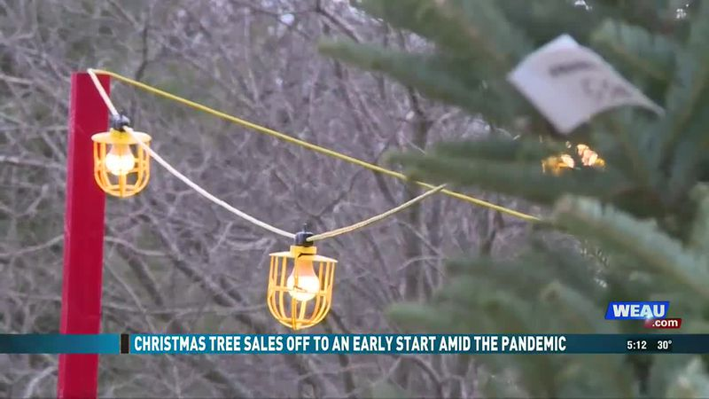 Christmas tree sales see early spike in sales amid pandemic