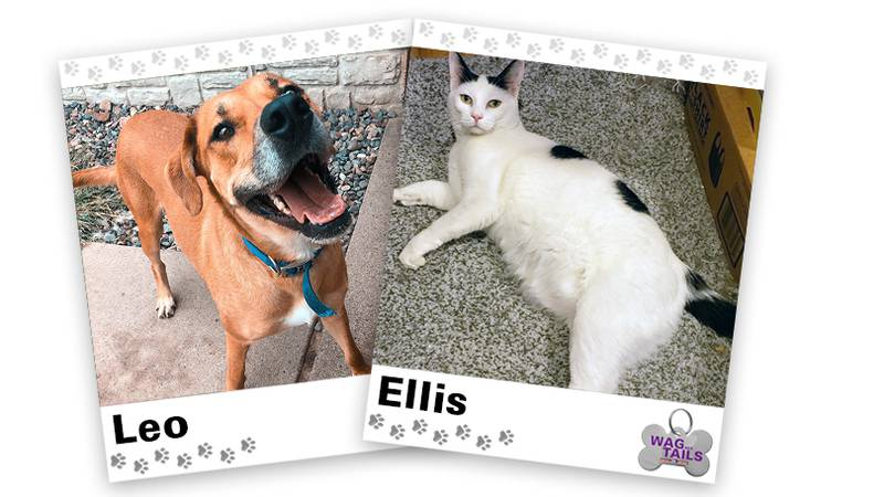 WAGNER TAILS: Leo and Ellis