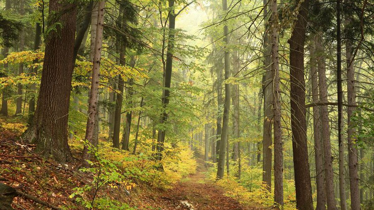 47009333 - forest trail in autumn scenery in early october