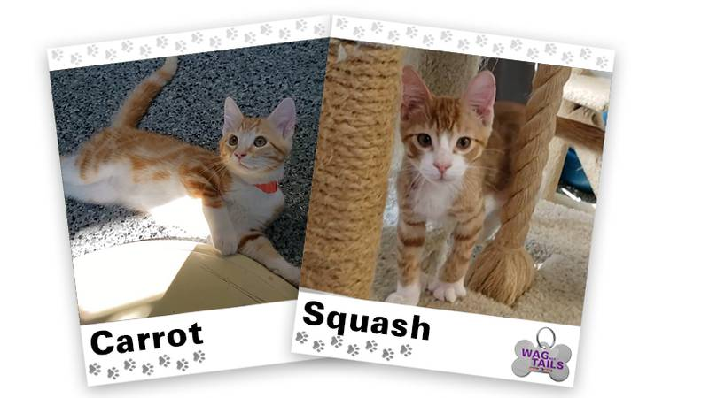 WAGNER TAILS: Carrot and Squash