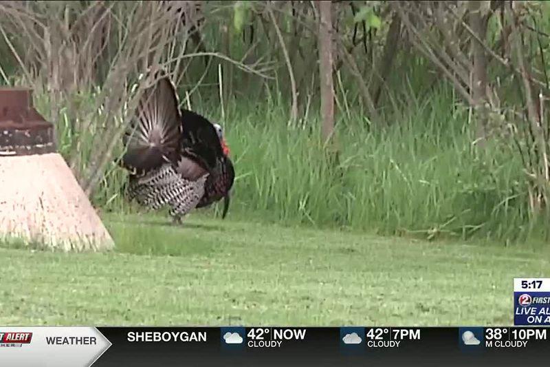 Spring turkey season kicks off this week