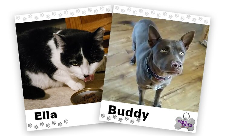 WAGNER TAILS: Ella and Buddy