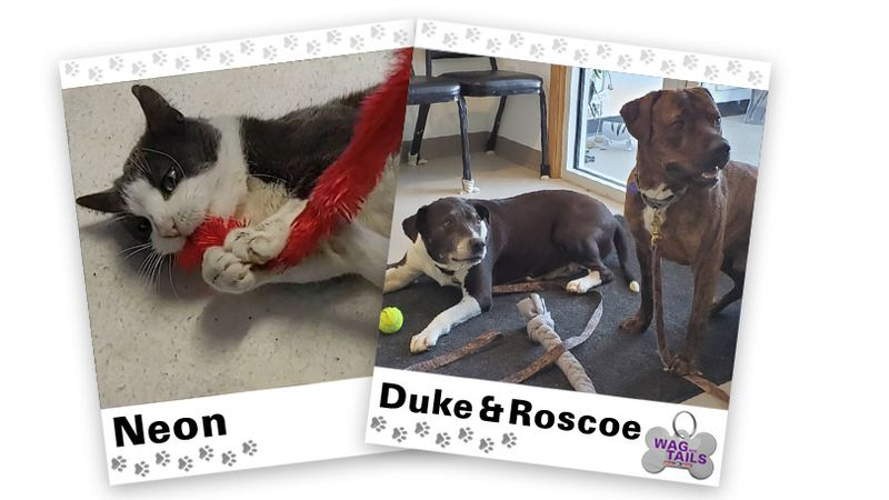 WAGNER TAILS: Neon and Duke & Roscoe