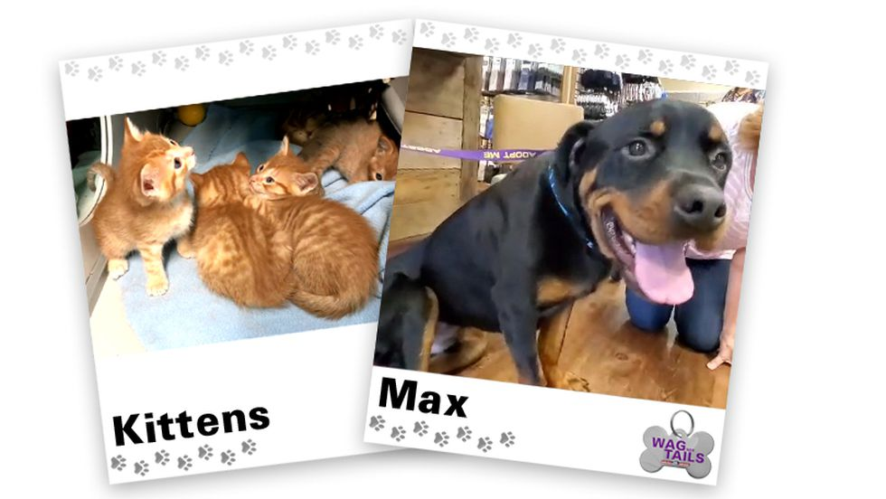 WAGNER TAILS: Kittens and Max