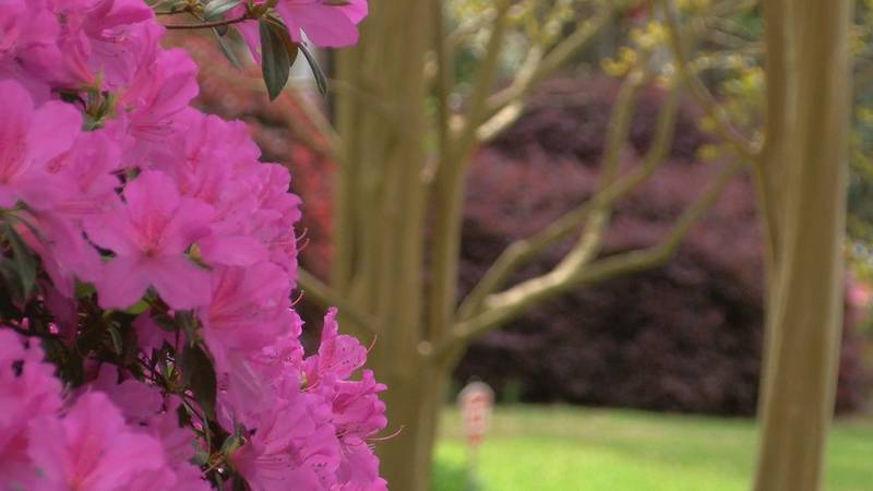 Flowers are blooming signaling springtime, but there is a downside for allergy sufferers,...