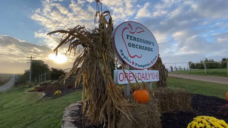 A Look Inside: Ferguson's Orchards