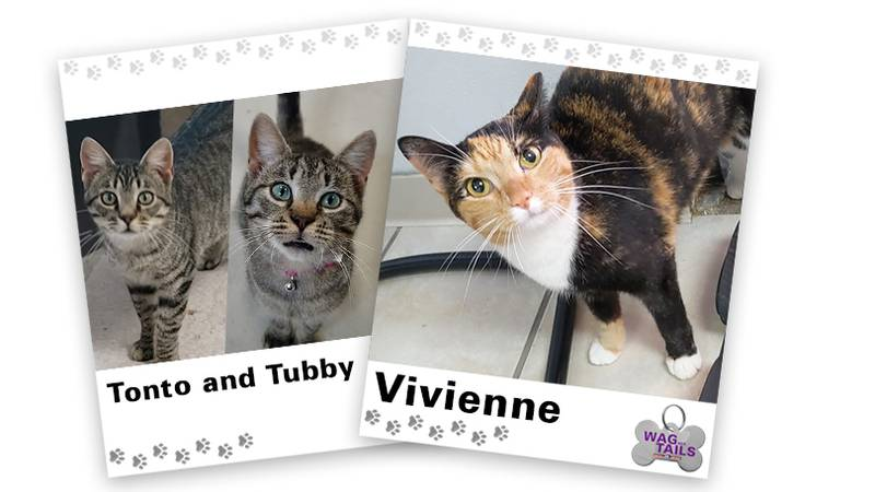 WAGNER TAILS: Tonto & Tubby and Vivienne
