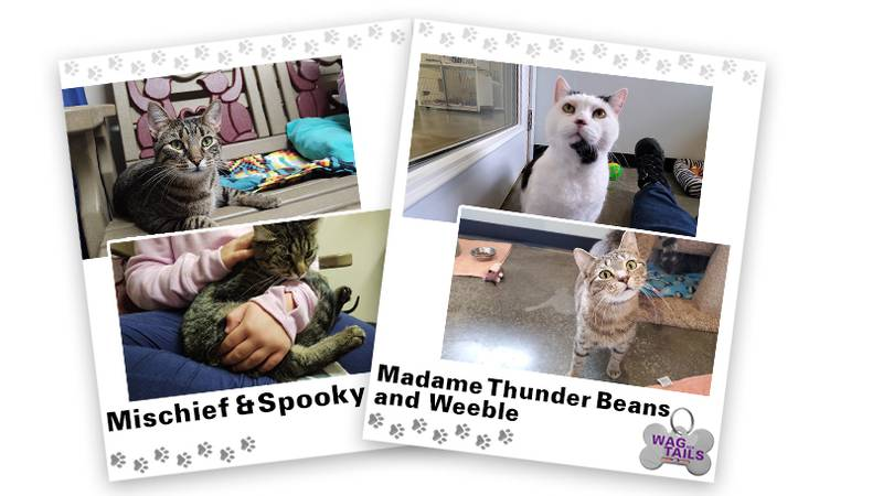 WAGNER TAILS: Mischief & Spooky and Madame Thunder Beans & Weeble