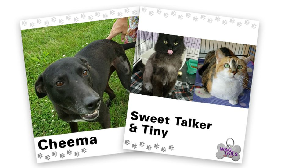 Wagner Tails: Cheema and Sweet Talker & Tiny