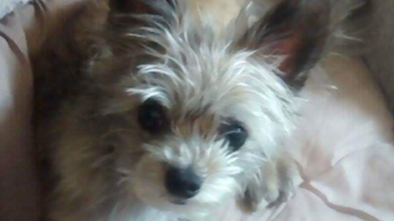 Officials in La Crosse are asking for information on this stolen dog.