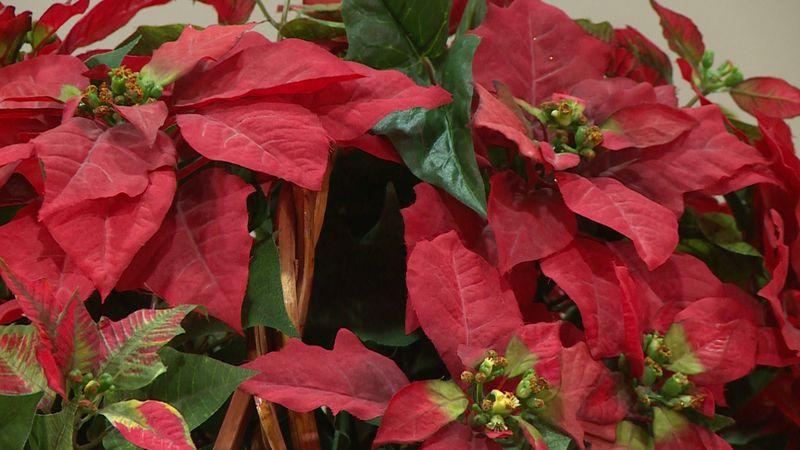 The St. Olaf Trio presents Christmas music of the season