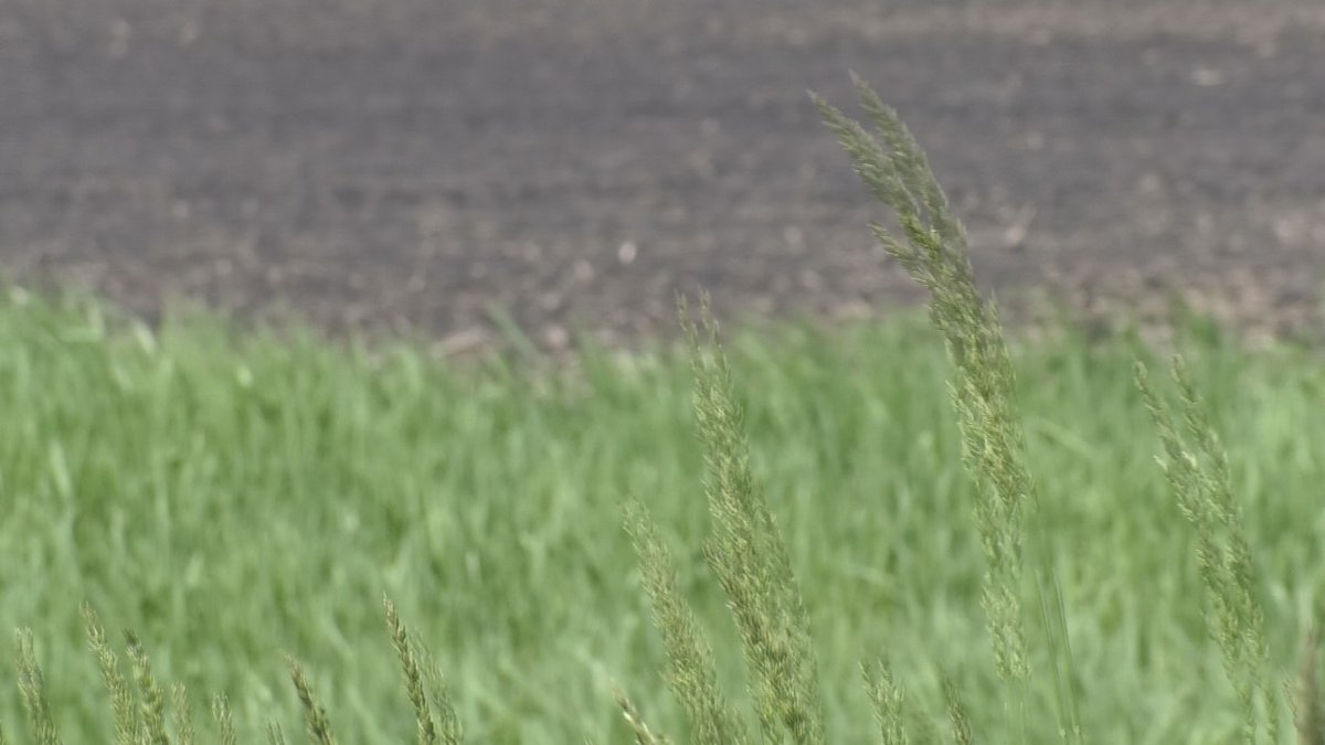 Severe drought conditions are present in 5% of the state, including at least parts of nine...