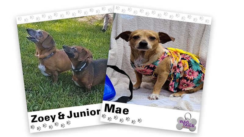 WAGNER TAILS: Zoey & Junior and Mae