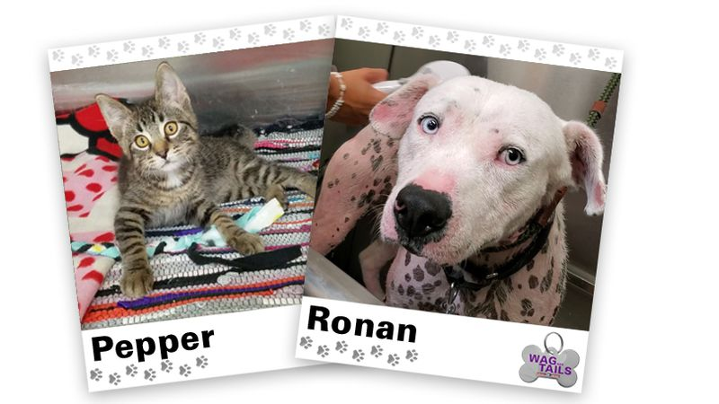 WAGNER TAILS: Pepper and Ronan
